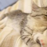 寝つきが悪い(入眠障害)の原因と対策全集 眠れない夜に悩む方へ