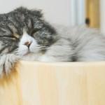 睡眠に悩みがある方へ!不眠症の原因と対策をすべてまとめました