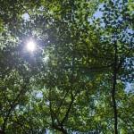 森林浴が楽しめるスポット4選【北海道編】|疲れた体と心を癒しにGO!