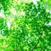 知られざる森林浴の4つの効果|ストレスを解消して体と心の健康に!