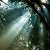 森林浴が楽しめるスポット12選【関西・近畿地方編】