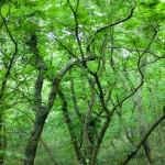 森林浴が楽しめる名所22選!関東のおすすめスポットを調べてまとめてみた