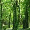 全国各地の森林浴スポットまとめ|一人旅・デート・家族旅行にぜひ!