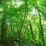森林浴がうつ・自律神経失調症の改善に役立つって嘘?本当?